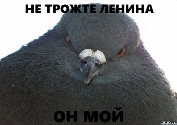 http://s4.pikabu.ru/post_img/2014/02/23/9/1393165706_2110490408.jpg