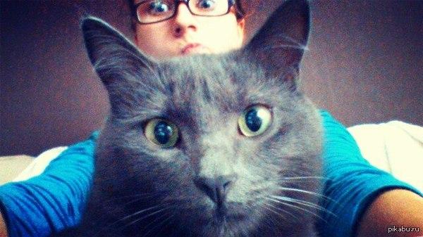 Селфи с чужим котиком кот селфи моё