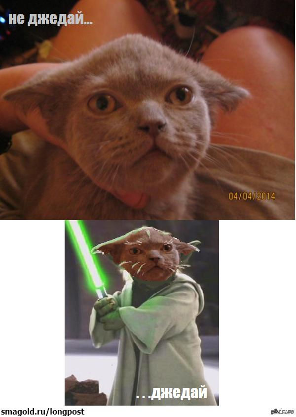 Коте джедай