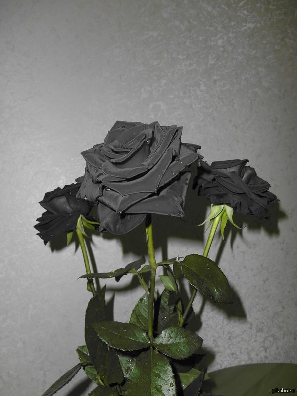 К чему снятся розы (красные, белые, розовые, чёрные и) 90