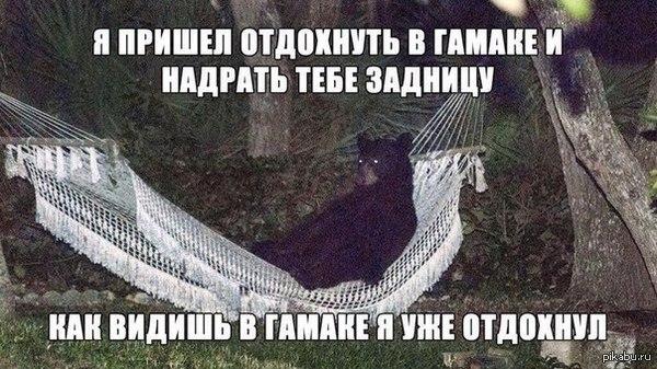 От nmd123 24 дня назад медведь россия мемы