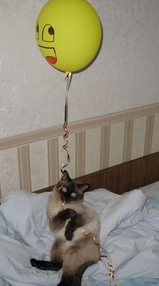 у моего кота сегодня день рождения поздравил с утра шариком в постель)))  кот, день рождения