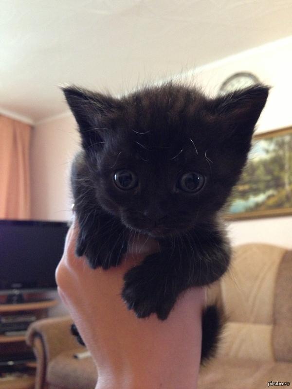В душу заглянул Вот такой милый котенок родился год назад, после этого взгляда оставили себе, теперь у нас дома 3 кота - мать, отец и дочка.  кот, красивые глаза