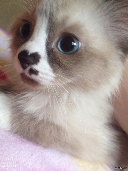 Симпатичный носик!   носик, кот, милота