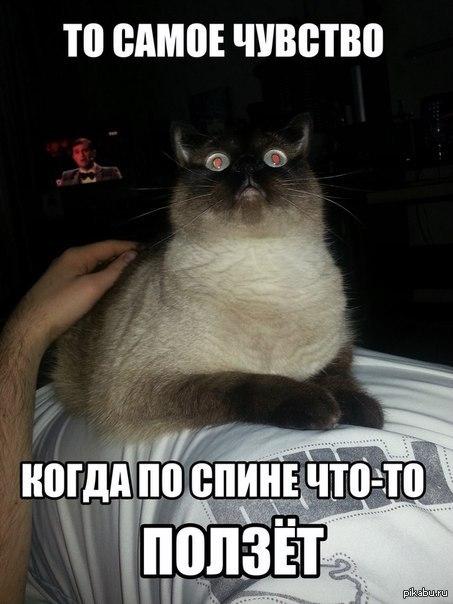 То чувство. ..   кот, То самое чувство, мурашки
