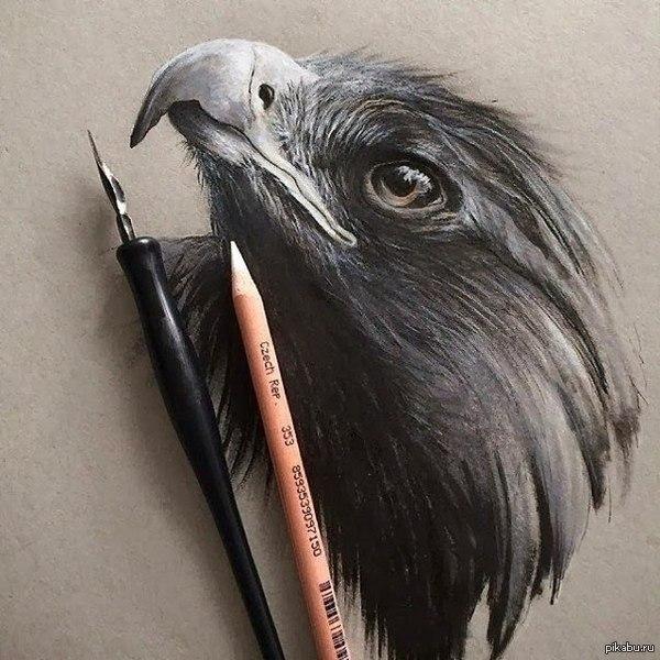 Белые карандаши правят миром ©   рисунок, птичка, Белый карандаш