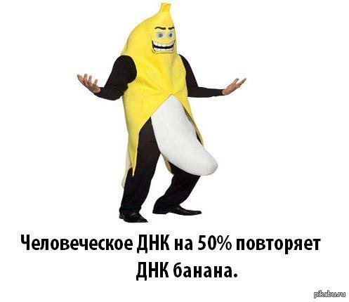 Днк банана и человека