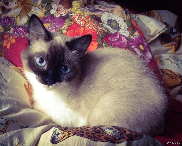 Маленькая кошка - всю жизнь котенок Хочу поделится своей кошкой. Ей уже 12, но друзья до сих пор спрашивают сколько ей месяцев:D  Милота, кот
