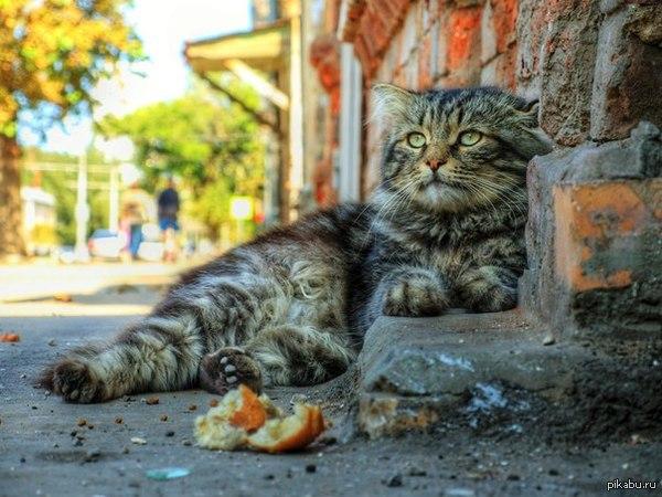 Котейка очень фотогеничный)))   фото котейки, кот, фотогеничность