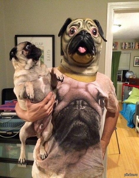 Когда у хозяина есть чувство юмора   мопс, Собака, принт