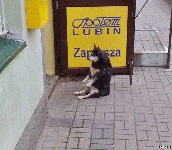 Странная собака Собакен на жопе сидякен!  Собака, странный