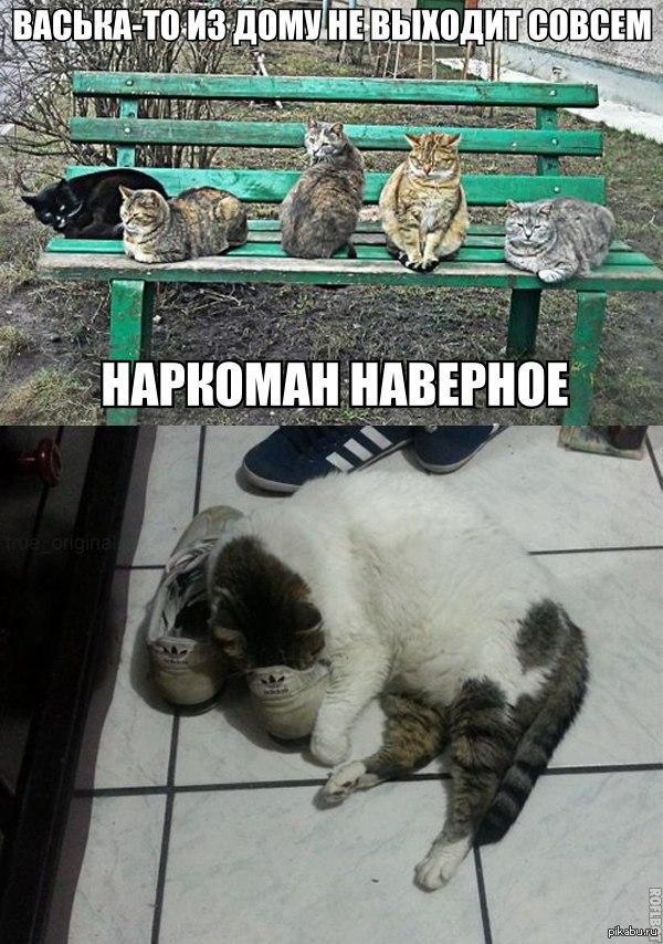 Коты на лавочке   юмор, кот