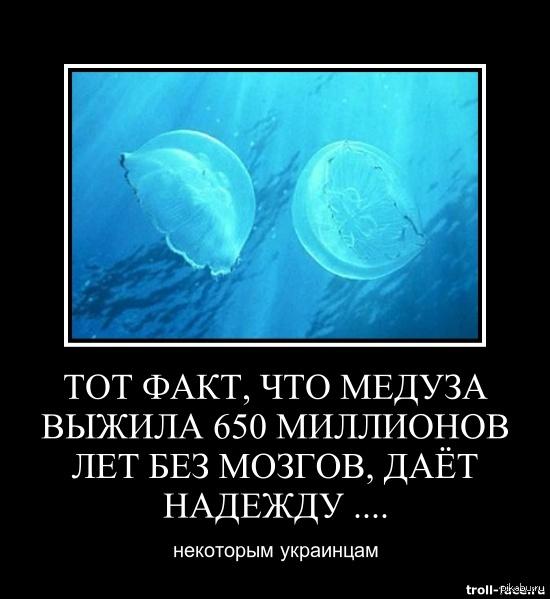 Медузы живут без мозгов