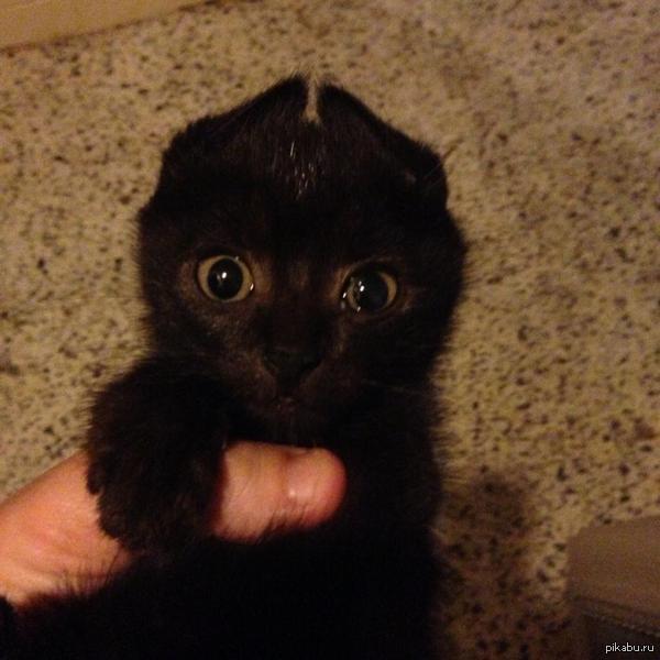 Беззубик, ты? котейка. кот, беззубик