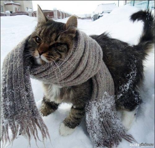 То чувство, когда вышел на улицу в -14   Холодно, очень холодно, коту холодно, зима
