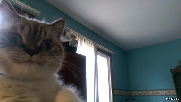 Этот кот выглядит безумно. ) кот, прикол, фото