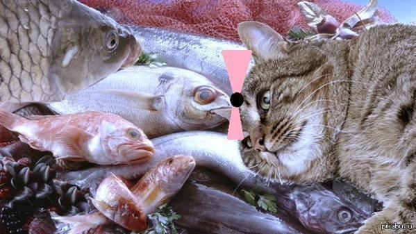 Обожравшийся кот картинки