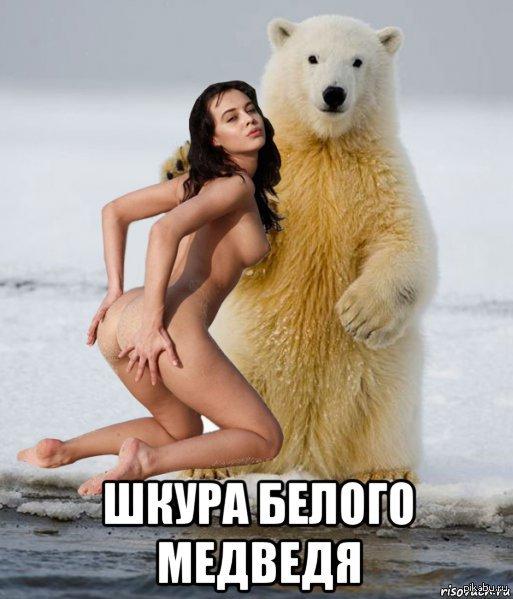 шлюха медведь прикол