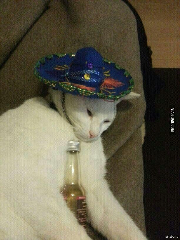 Кот мексик
