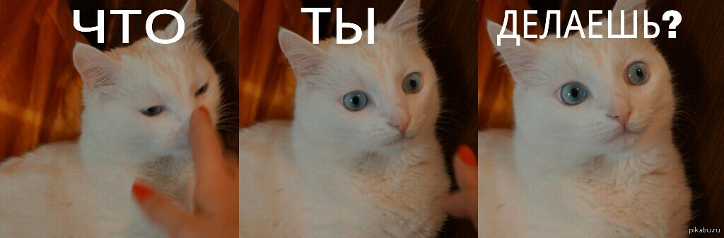Активация кота