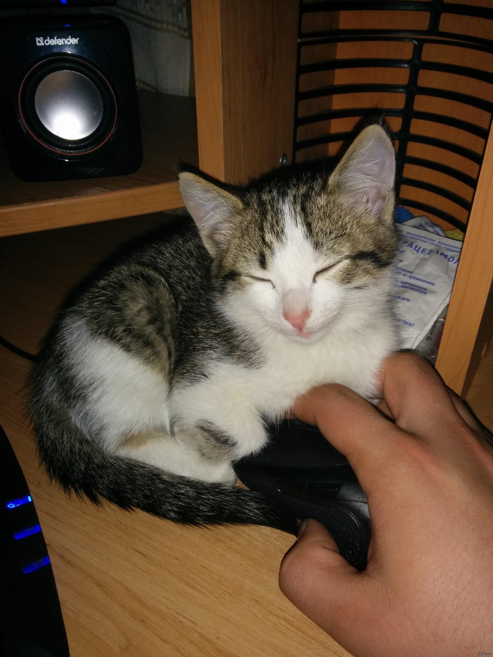 Играть надо как с котом