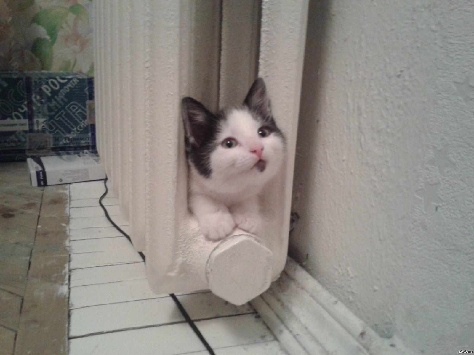 Картинки по запросу кот на батарее