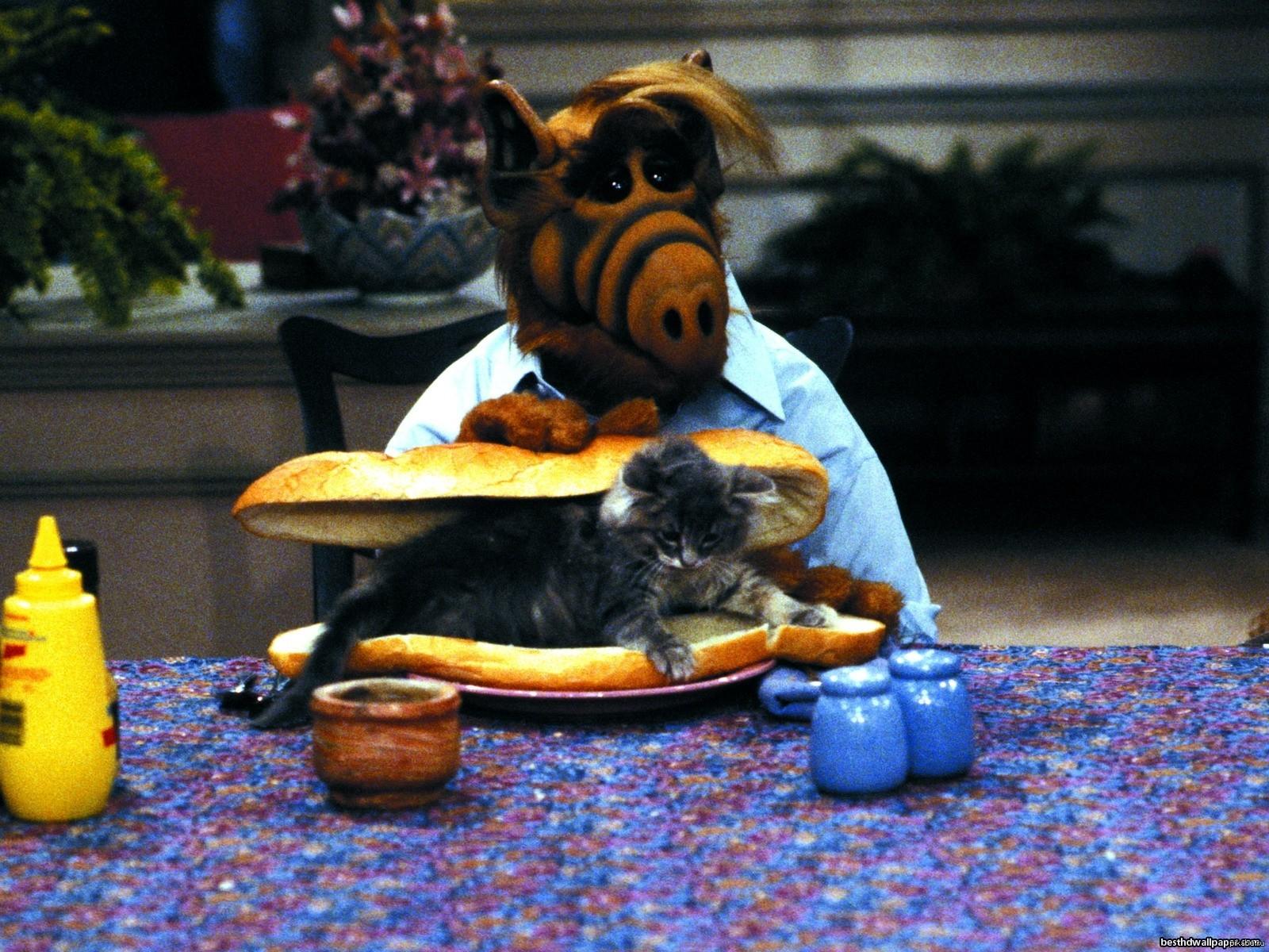 Альф любит котов есть