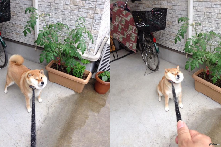 Что делать если собака плохо ходит