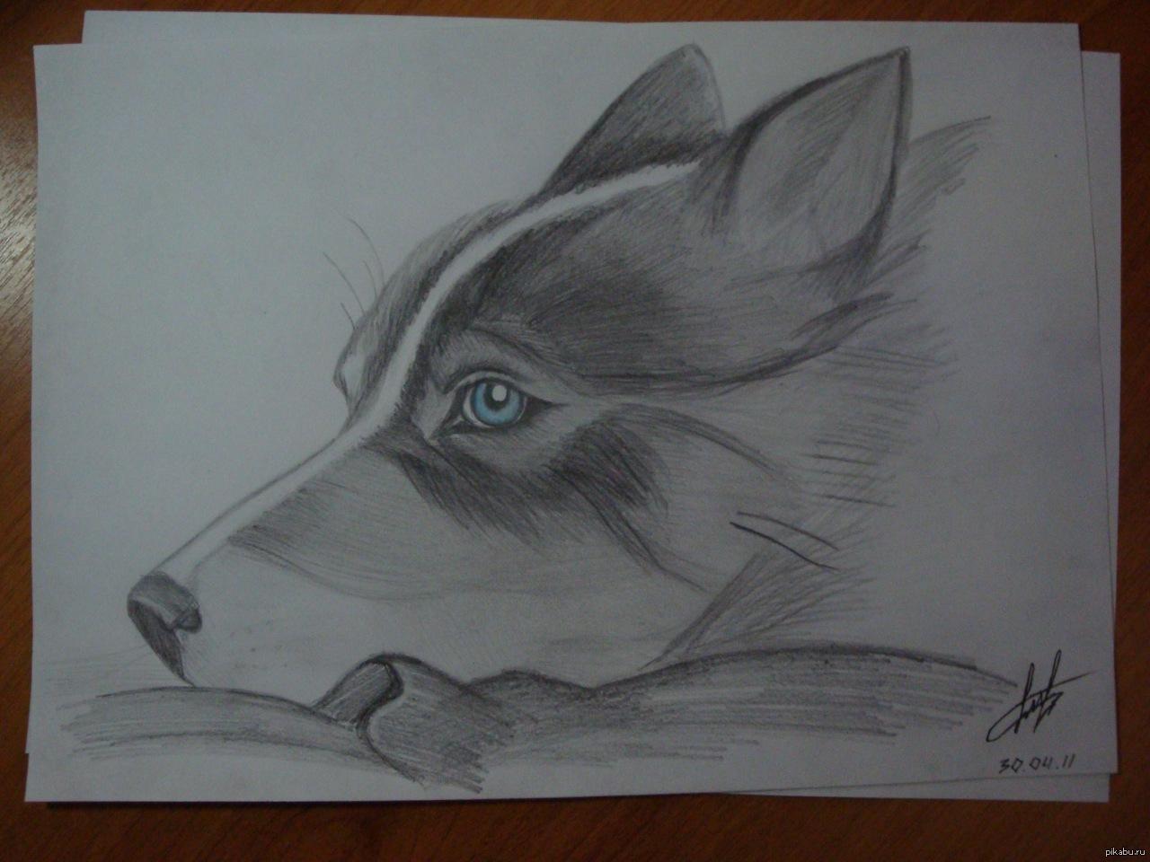 Животные рисунки рисовать 6