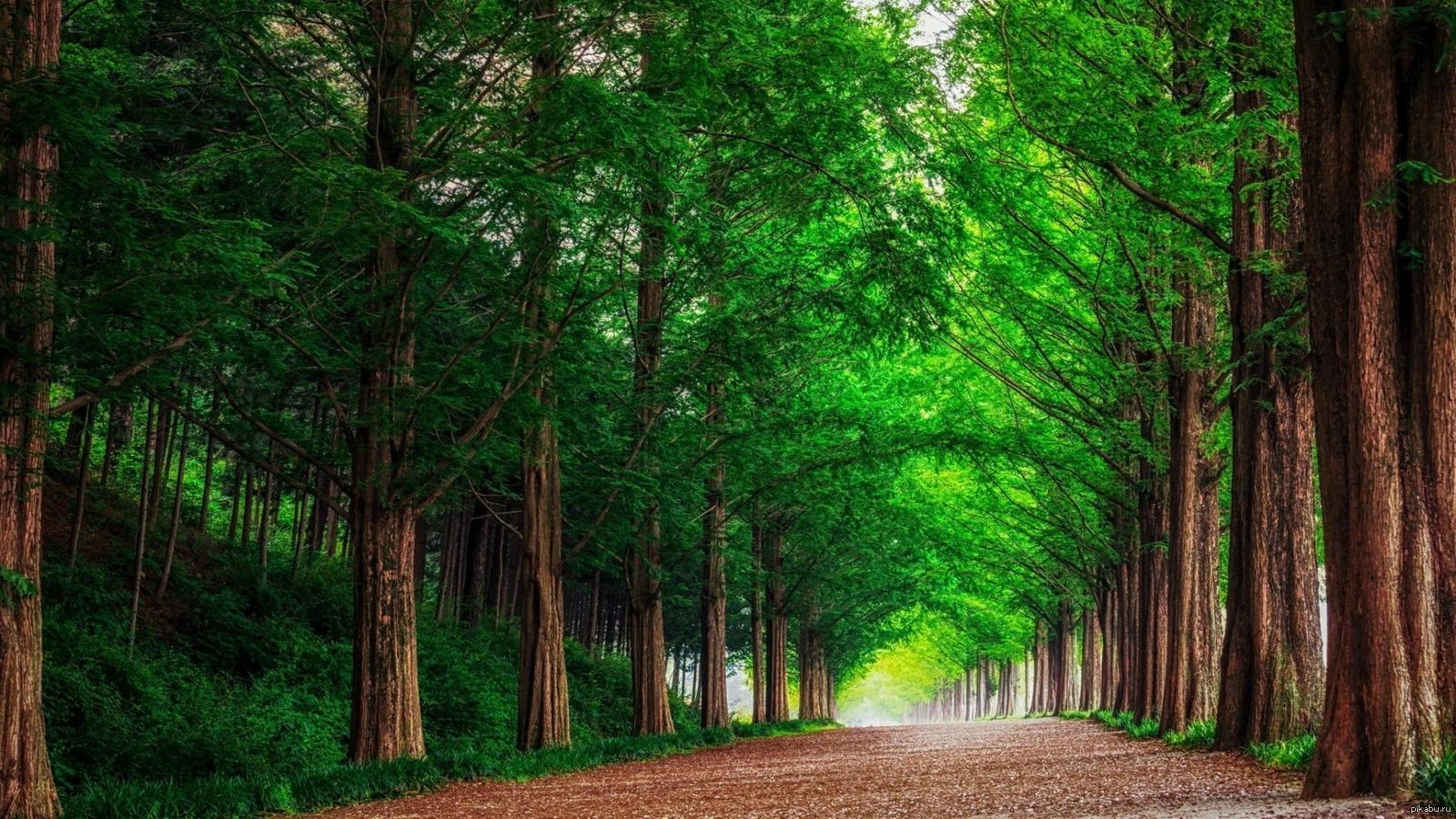 лес картинки для рабочего стола